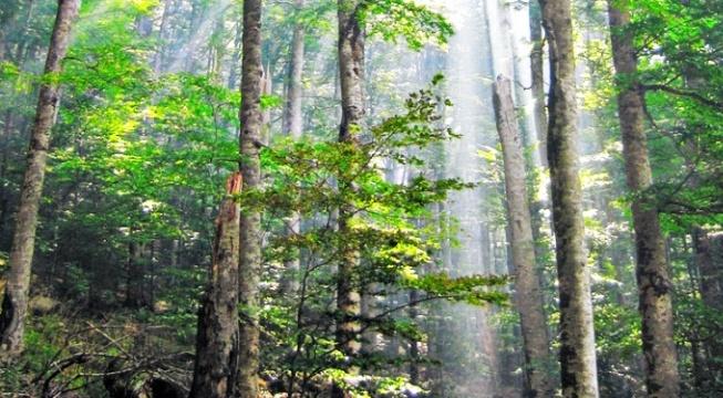 Biogradska suma connect with nature