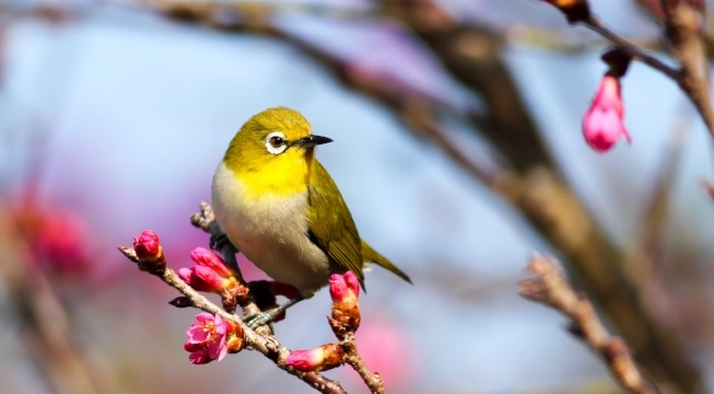 bird on branch with flower blossoms