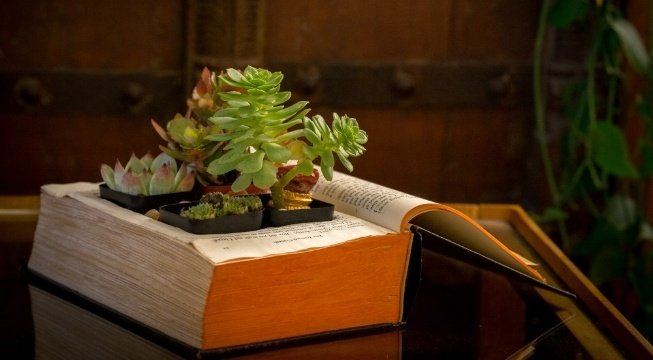 and old book upcycled into a planter