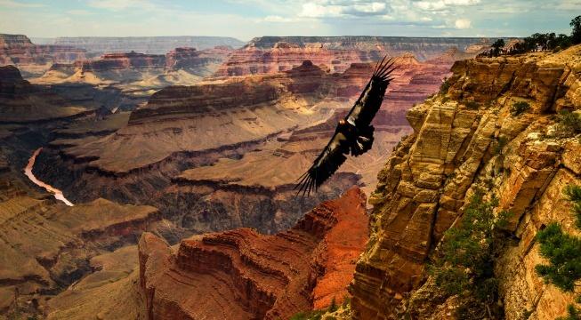 eagle and condor prophecy perkins