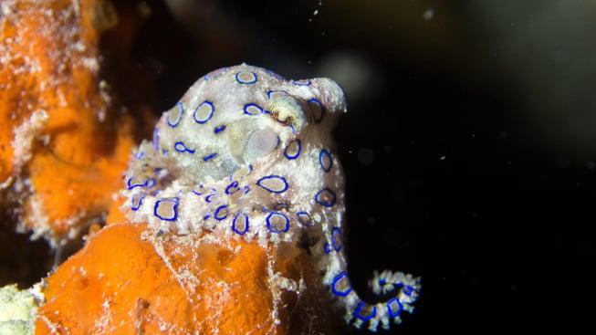 octopus saving planet