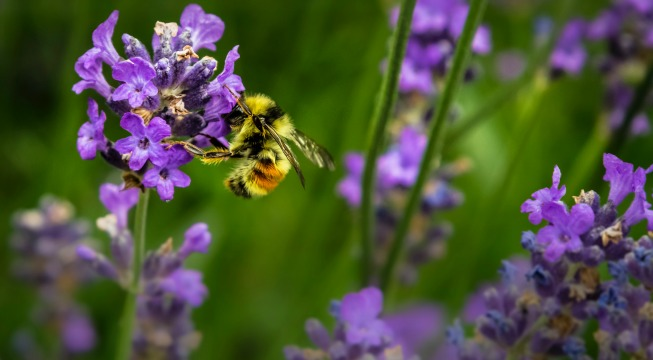 bees helping planet