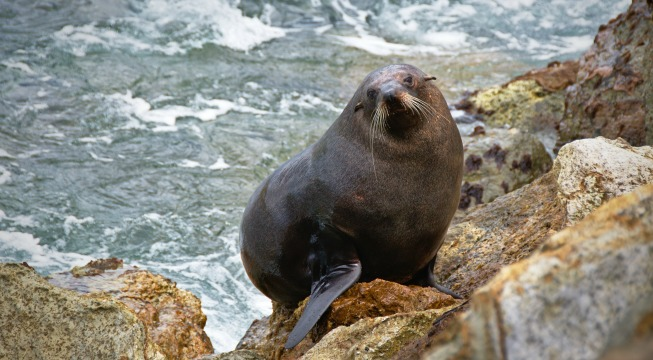 sea lions helping planet